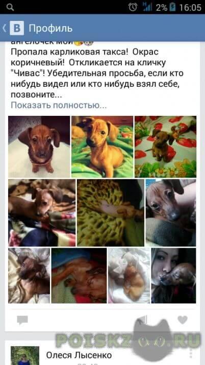 Пропала собака кобель г.Кемерово