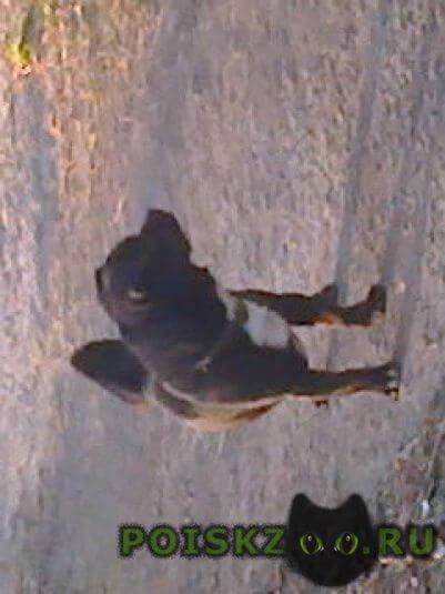 Найдена собака кобель г.Екатеринбург