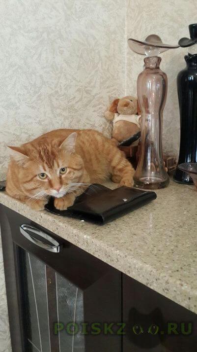 Пропал кот г.Москва