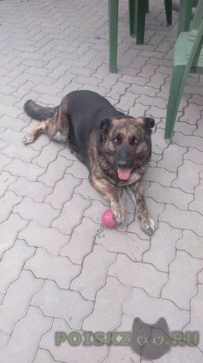 Пропала кошка собака, кличка альма. г.Ростов-на-Дону