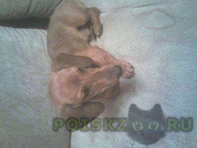 Найдена собака кобель г.Новокузнецк