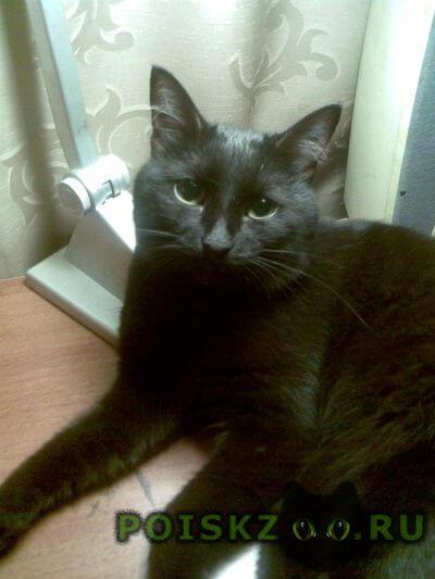 Пропал кот черный г.Нижний Новгород
