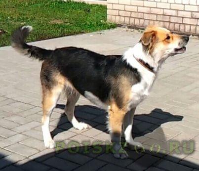 Пропала собака д. полково рязанская область г.Рязань