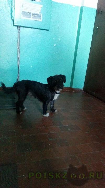 Найдена собака. г. г.Красноярск