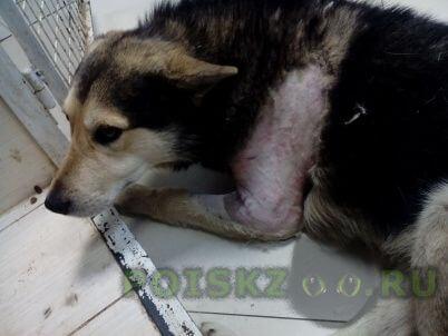 Пропала собака кобель г.Красноярск