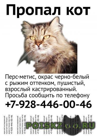 Пропал кот г.Сочи