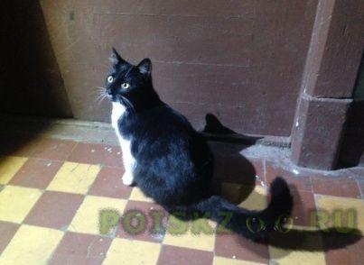 Найдена кошка приморский район спб г.Санкт-Петербург