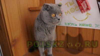 Пропала кошка г.Краснодар