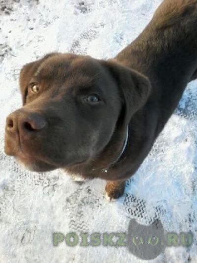 Найдена собака кобель г.Пироговский