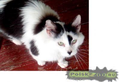 Найден кот г.Дубна