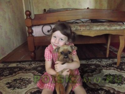 Пропала собака помогите найти потеряшку г.Санкт-Петербург
