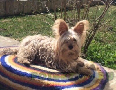 Пропала собака кобель помогите найти собаку. г.Пермь
