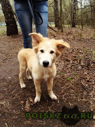 Найдена собака кобель щенок в п. рублево г.Москва