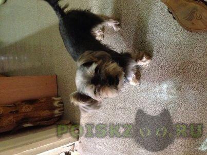 Найдена собака кобель г.Ступино