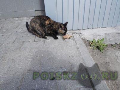 Найдена кошка г.Мытищи