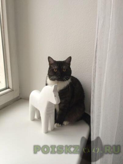 Пропала кошка кошечка г. г.Быково (Московская обл.)