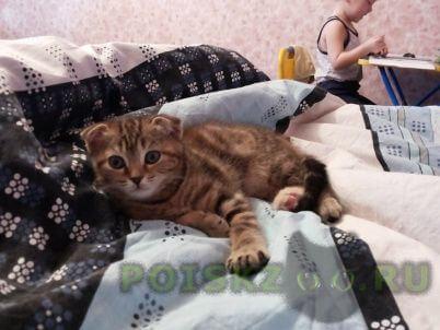Пропала кошка г.Новокузнецк