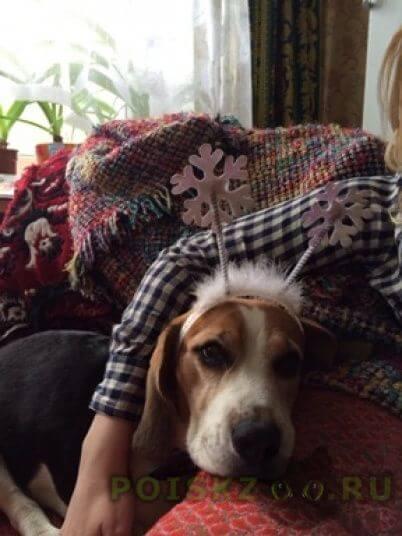 Пропала собака г.Тверь