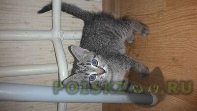 Найдена кошка котенок г.Санкт-Петербург