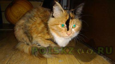Пропала кошка г.Ярославль