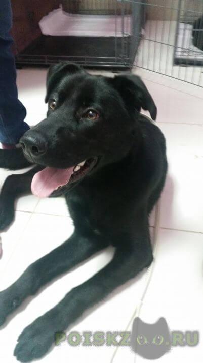 Найдена собака кобель г.Тула