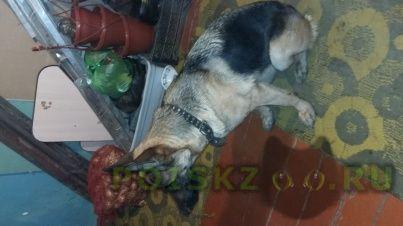 Найдена собака г.Волгоград