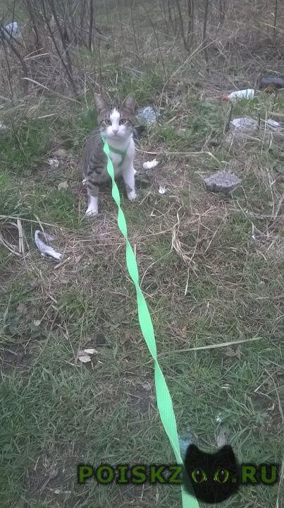 Пропал кот г.Курск