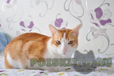 Пропал кот в мкр. солнечный г.Красноярск