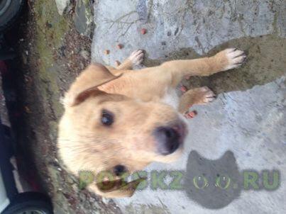 Найдена собака кобель г.Сочи