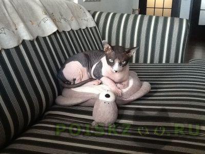 Пропал кот  г.Мытищи