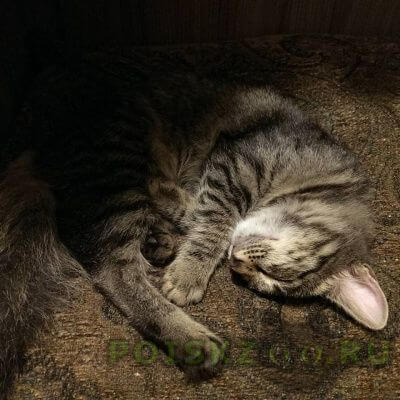 Найдена кошка молоденькая г.Реутов
