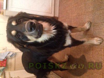 Пропала собака большая черная девочка г.Санкт-Петербург