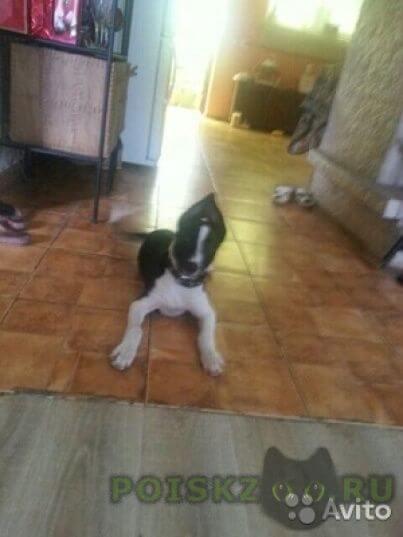Пропала собака пожалуйста верните собаку она очень любима в семье г.Туапсе