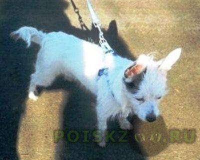 Пропала собака кобель г.Архангельск