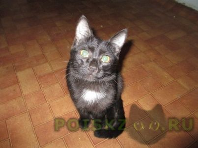 Найден котик подросток чёрненький г.Магнитогорск