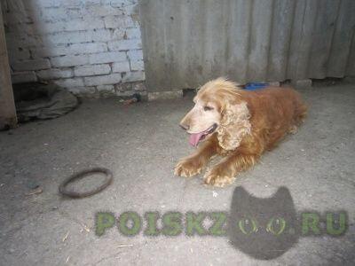 Пропала собака кобель г.Таганрог