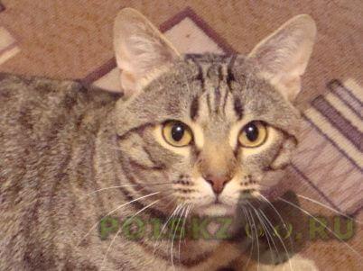 Пропал кот г.Лыткарино