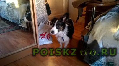 Найдена собака г.Екатеринбург