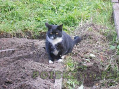 Пропала кошка помогите найти г.Лисий Нос