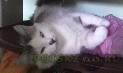 Пропала кошка г.Харьков