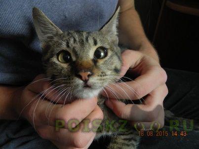Найден кот г.Серпухов