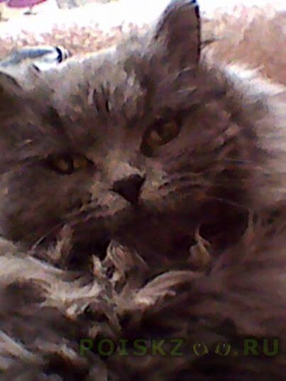 Пропала кошка г.Обнинск