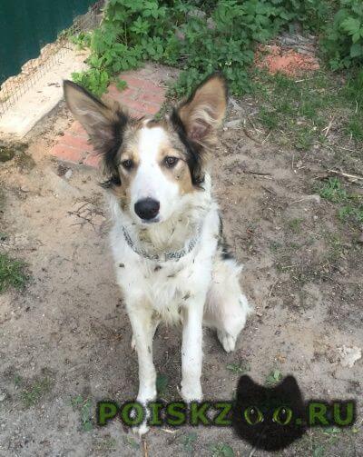 Найдена собака кобель срочно важно г.Пушкино
