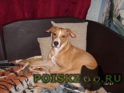 Пропала собака кобель помогите найти сыночка  г.Волгоград
