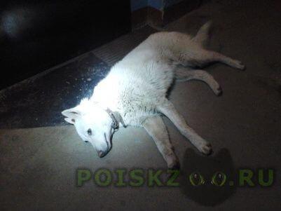 Найдена собака 24 апреля, в 21:03 г.Нижний Новгород