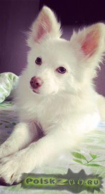 Пропала собака кобель г.Красногорск