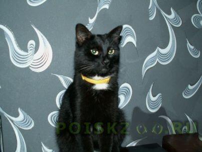 Пропала кошка чёрная на улице будённого, правдинск г.Балахна