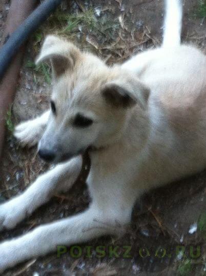 Найдена собака кобель г.Волгоград