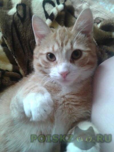 Пропал кот в ночь на 28.02.16, в районе проспекта наставников г.Санкт-Петербург
