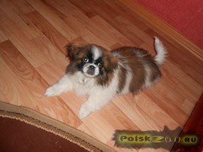 Пропала собака кобель г.Новоаннинский
